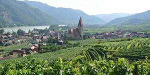 Weißenkirchen Wachau Ried Achleithen grün Weingarten2000x1000Slider