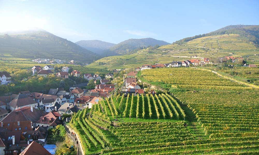 Weingärten